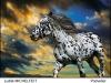 Fotokroužek 2012 - 51. výstava na Velehradě